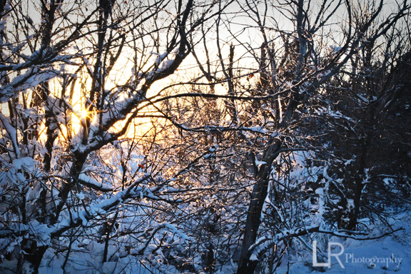 snowytrees_web