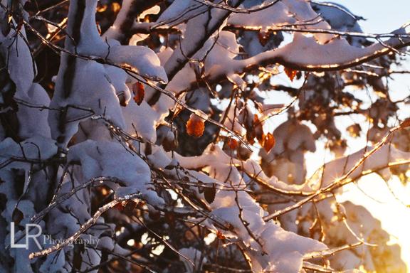 sunbreakingthrough_web