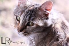 catphotography