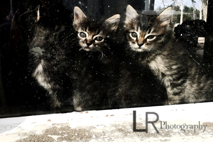 kittens looking through a window