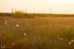 field_web
