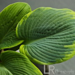 plant_3logo