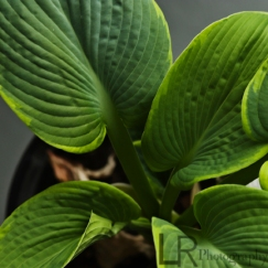plant_4logo