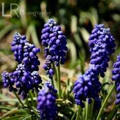 purpleplant_2logo