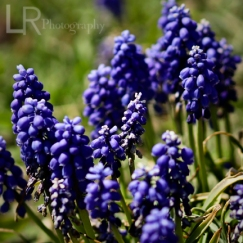 purpleplant_3logo