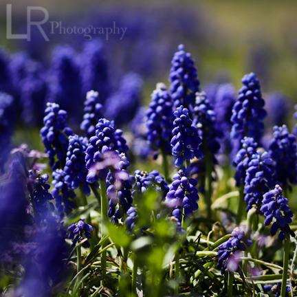 purpleplant_logo